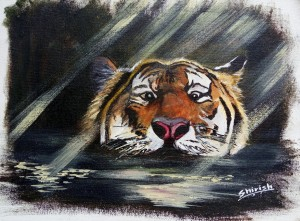 Tiger in the swamp - Copy